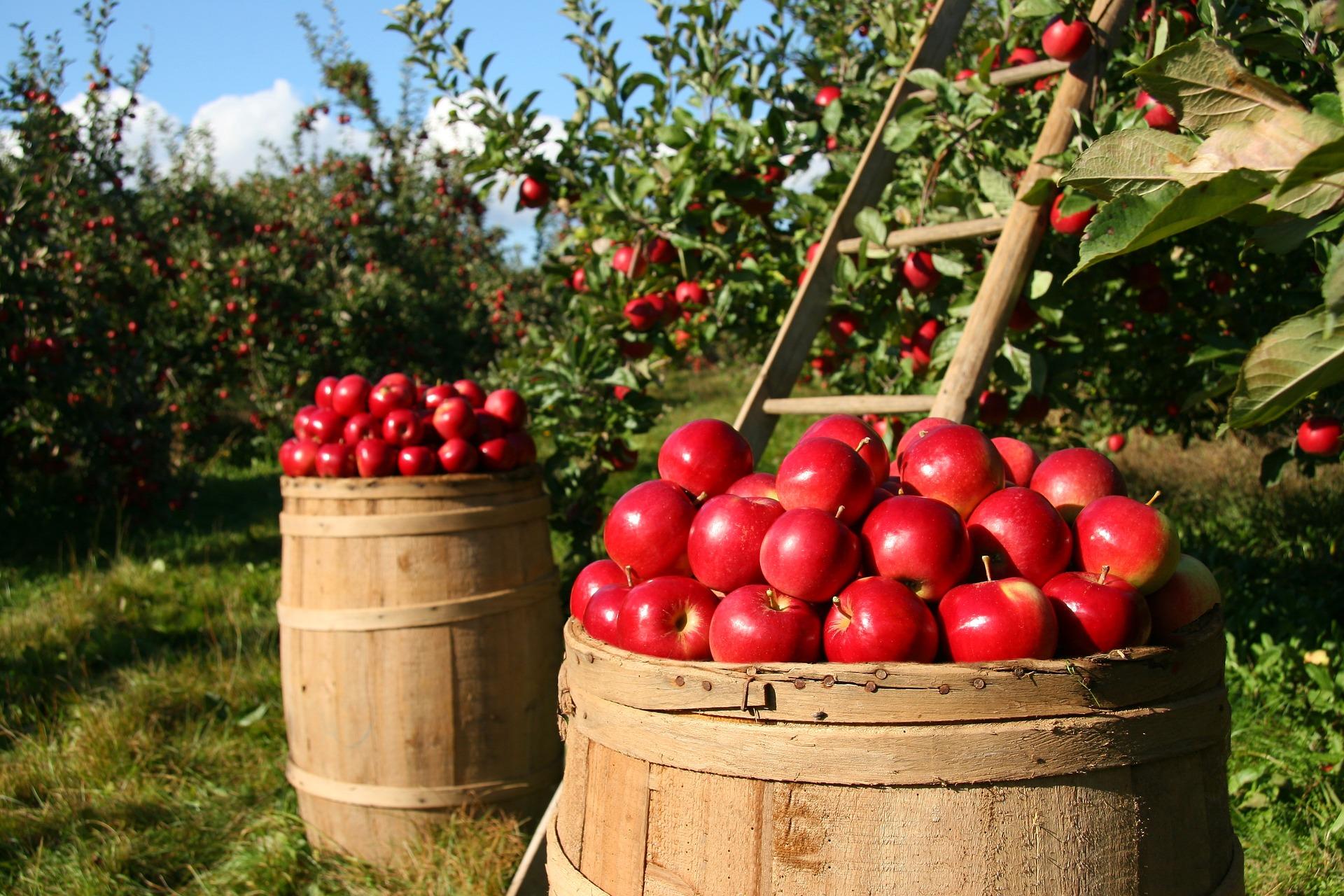 Začínáme zahradničit – jaké druhy ovocných stromů vybrat a co je dobré vědět? 1