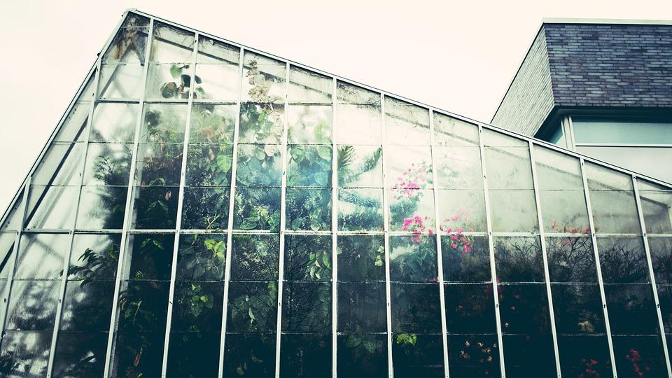 Rady a tipy – jak úspěšně pěstovat ve skleníku? 2