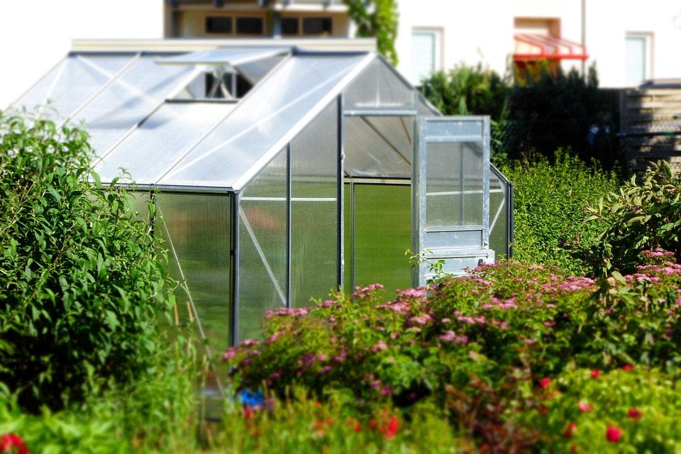 Rady a tipy – jak úspěšně pěstovat ve skleníku? 1