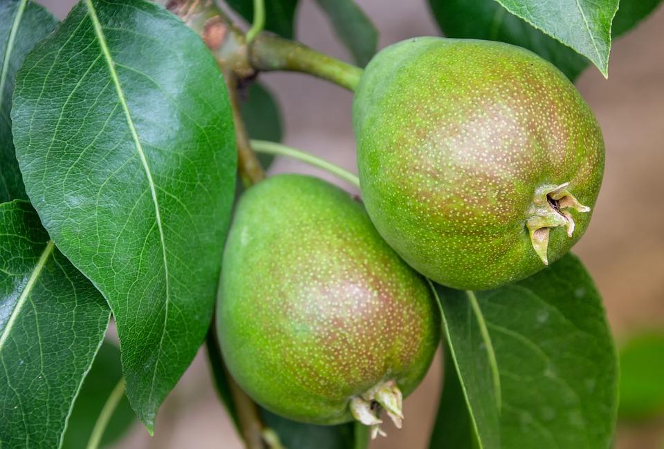 Začínáme zahradničit – jaké druhy ovocných stromů vybrat a co je dobré vědět? 2