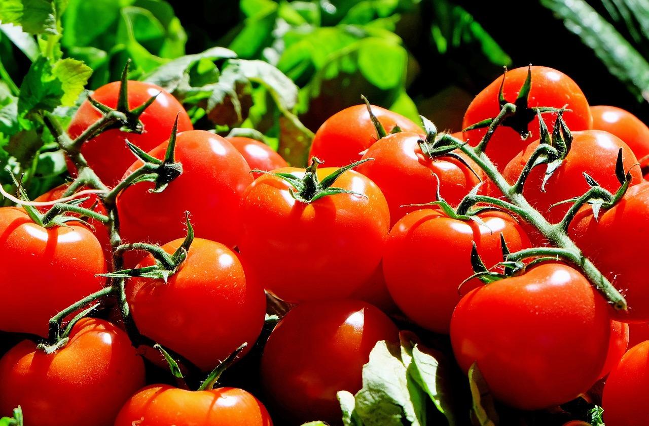 Rajčata a zajímavosti o nich – co možná nevíte? 1